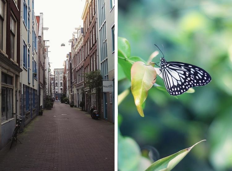 Amsterdams street butterfly