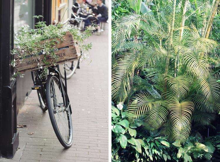 Amsterdam street Hortus Botanicus